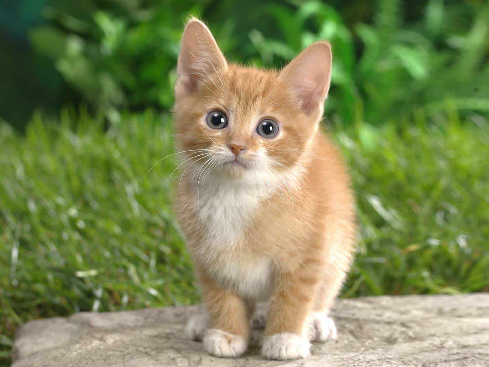 Top Ten Cute A Cute Cat
