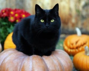 black cat names photo