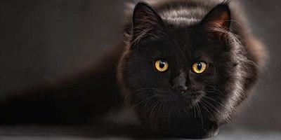 Best Black Cat Names - The Ultimate List (109 ideas!)