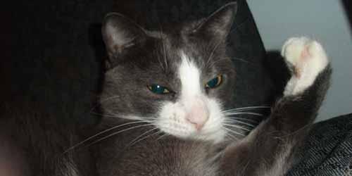 75 Tough Boy Cat Names - Find Cat Names