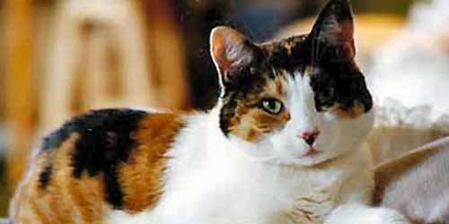 Unique Calico Cat Names - 44 Perfect Names to Check Out