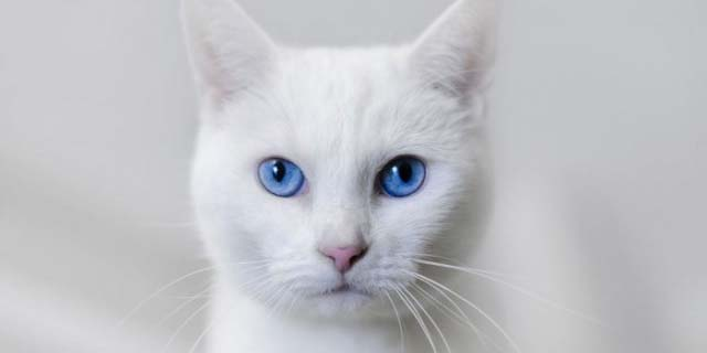Cat Names Search Find The Perfect Name For Your Cat