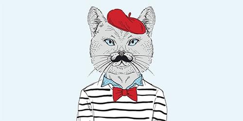 Paris Kitten