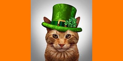 Irish-cat-names-sm