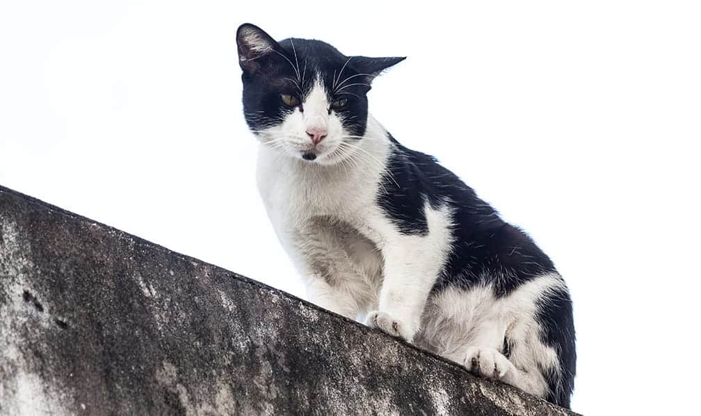 cat names boy cartoon awesome clever animals little
