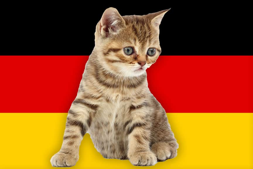 Image result for german cat