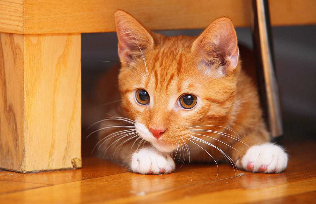 Elegant Orange Cat Names