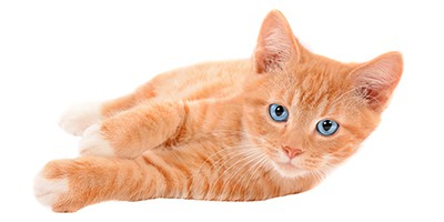 ginger-cat-names