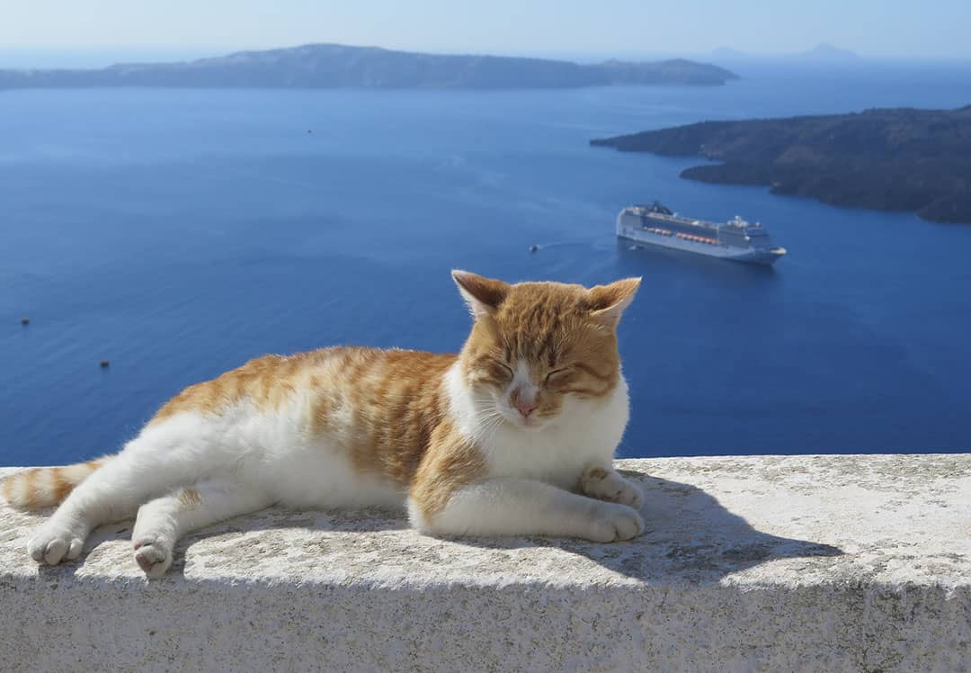 Opa Greek Cat Names 55 Amazing Names for Your Cat