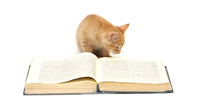 literary-cat-names-sm