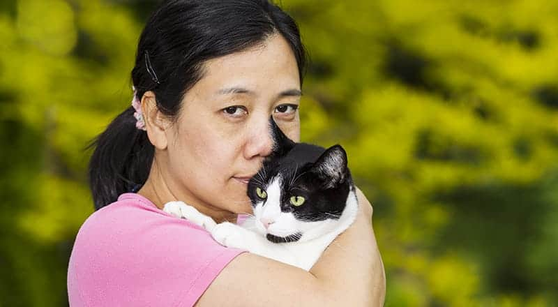 Beautiful Korean Cat Names – 79 Creative Ideas - Find Cat Names