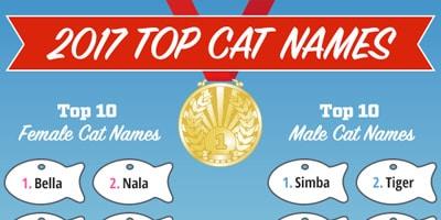 top cat names