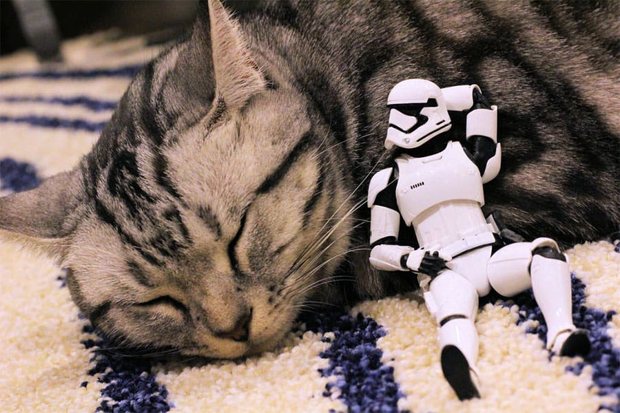 star wars cat names
