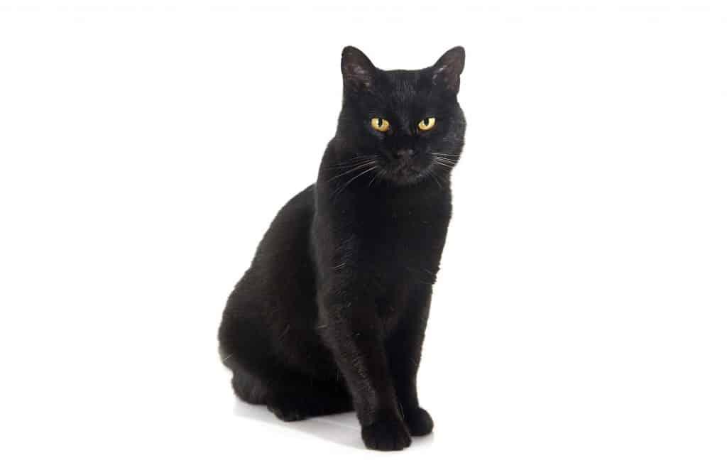 Halloween Cat Names – 100+ Spooktacular Ideas - Find Cat Names
