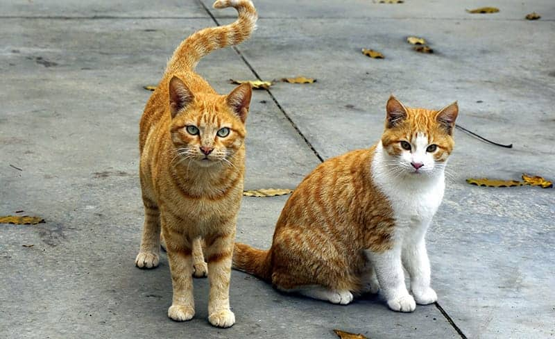 Orange Cat Names