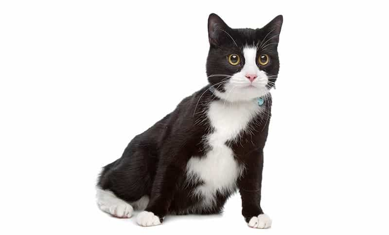 Tuxedo Cat Names