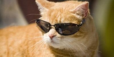 cool cat names thumbnail