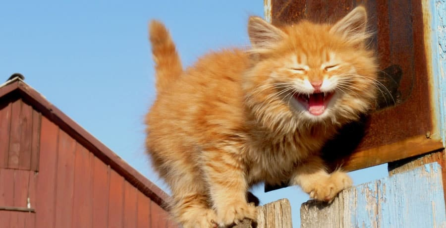The Ultimate List of Punny Cat Names - 111+ Hilarious Names