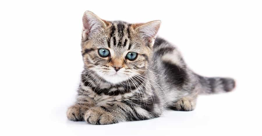 Unisex Cat Names - 125+ Perfect Names - Find Cat Names