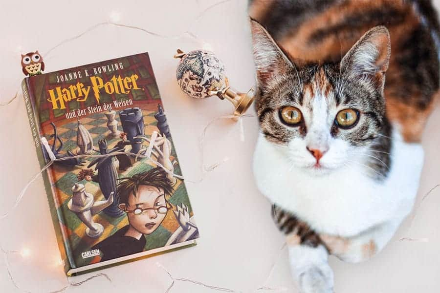 77+ Harry Potter Cat Names - Great Name Ideas! - Find Cat Names