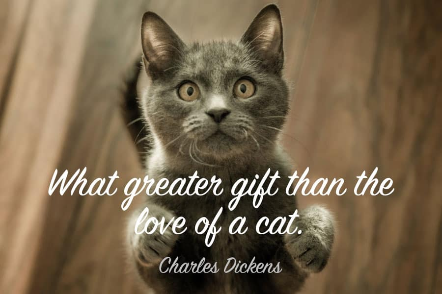 79+ Best 79+ Best Cat Quotes , Famous, Funny \u0026 Inspirational