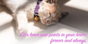 79 Best Cat Quotes Famous Funny Inspirational Quotes